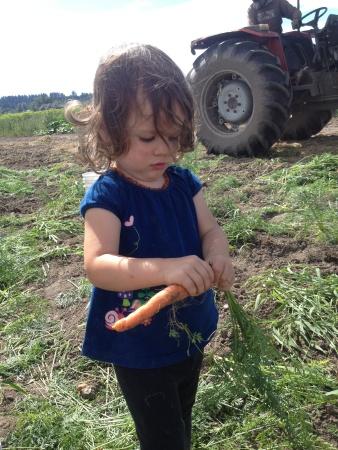 GLA Lila carrot