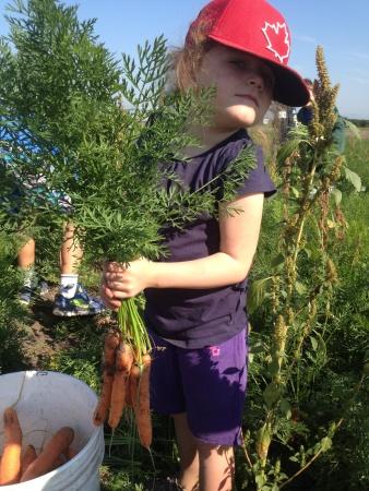 GLA Sophie carrots